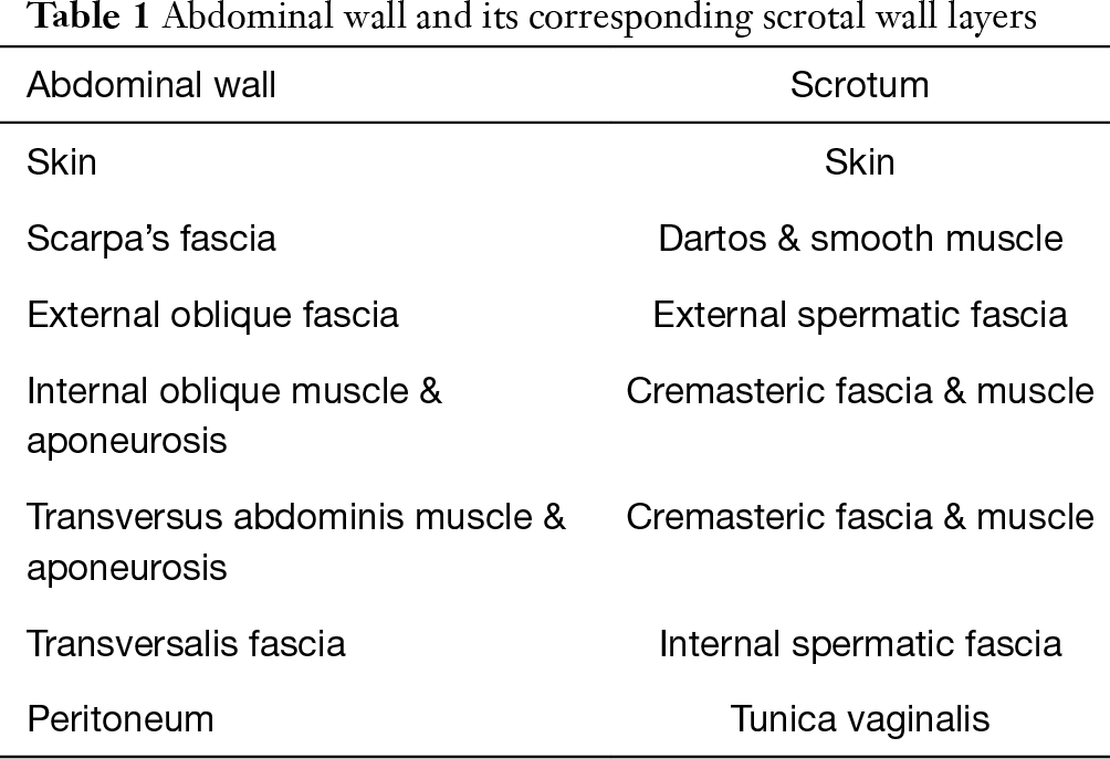 Anatomy and physiology of chronic scrotal pain - Patel ...